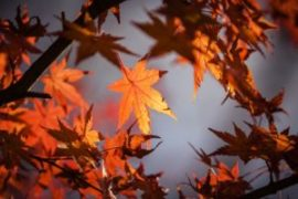 autumn-leaves-1415541_960_720